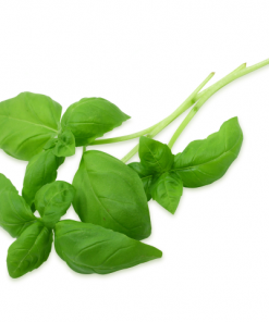 herbs-unlimited-basil-roots-fruits-the-harrogate-greengrocer.png