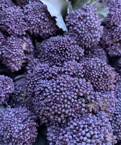 purple-sprouting-brocolli-rootsfruits-harrogate-images.jpg